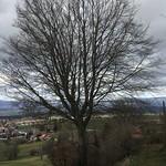 2020_02_12_Frienisberg_Beat (72)