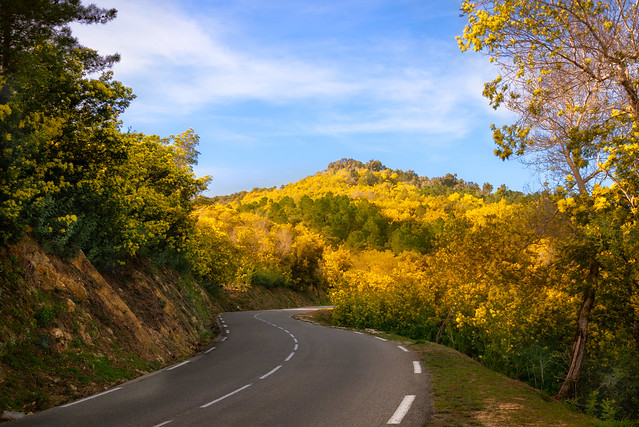 la colline aux mimosas
