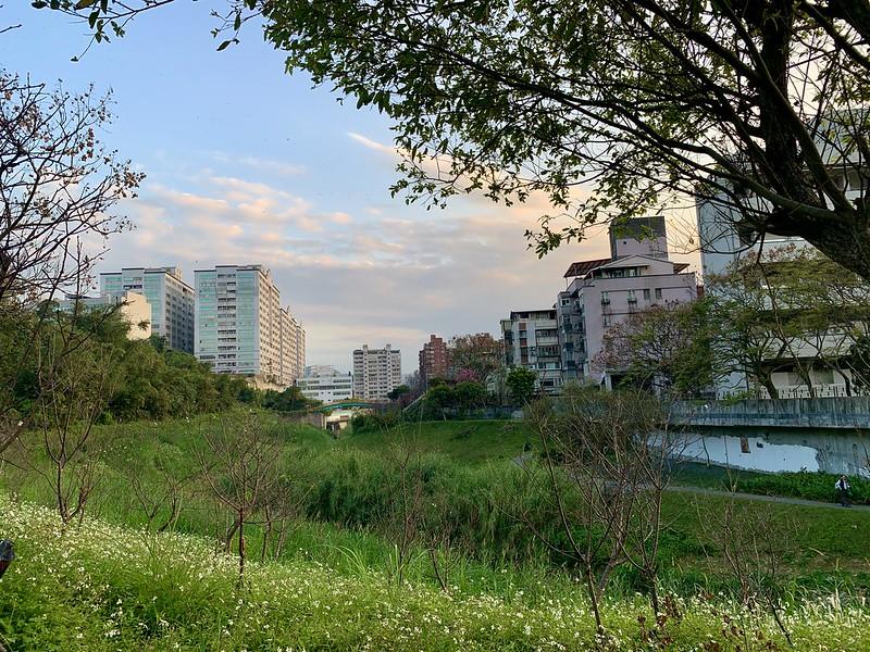 樂活公園櫻花林 台北內溝溪