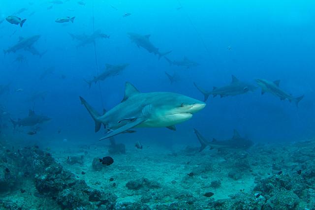shark19Jan27-20