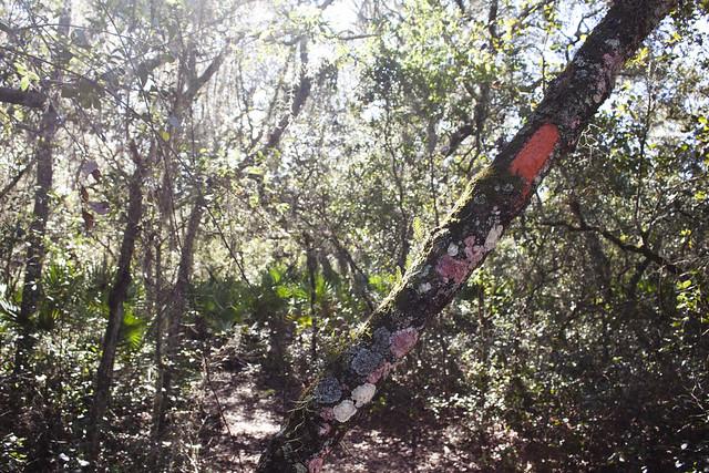 Florida Trail Chuluota Wilderness