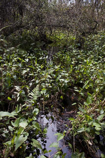 Wetland, Florida Trail