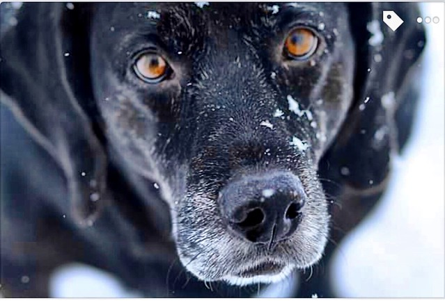 My boy in the snow.  Those eyes show his soul.