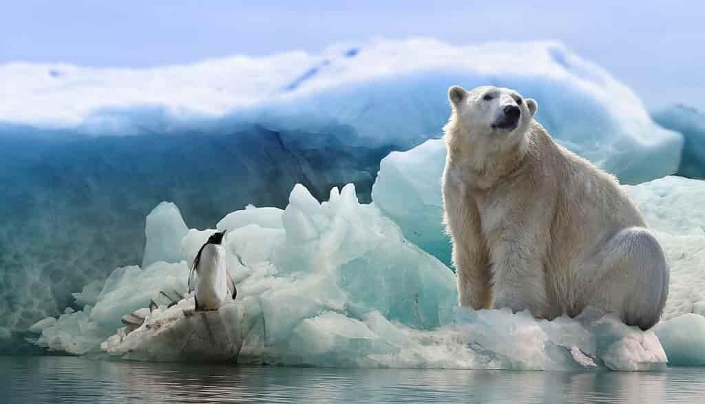 la-fonte-des-glaces-de-Antarctique-fera-monter-le-niveau-des-mers