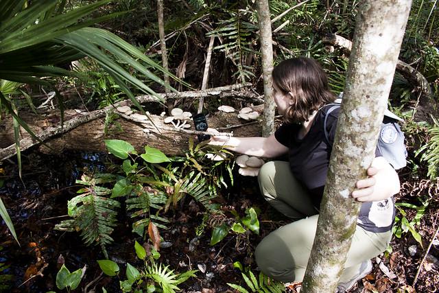 Kate Dolamore looking at fungi