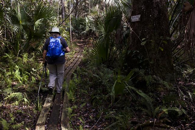 Buscombe Creek, Florida Trail