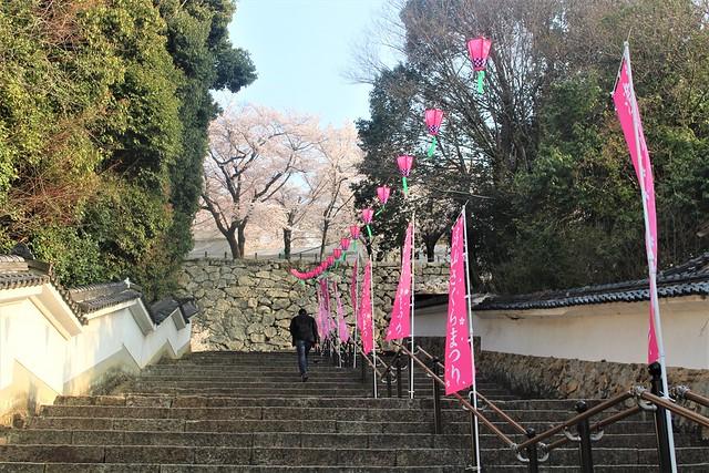 tsuyamajo-sakura027