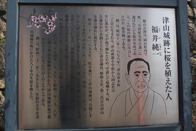 hikonejo-sakura004