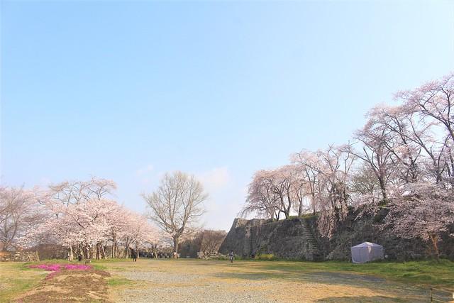 tsuyamajo-sakura048