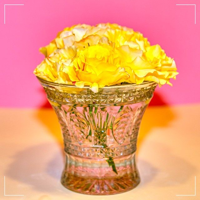 Yellow roses on pink background