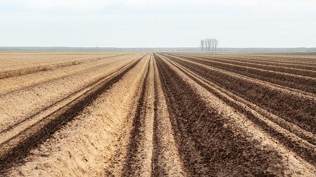 Endless Asparagus Fields