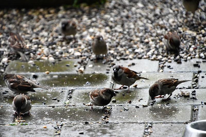 Sparrows 13.02 (6)