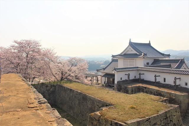 tsuyamajo-sakura064
