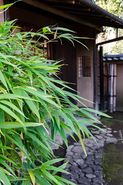 Canon EOS 9000D Shooting in Tokyo
