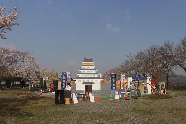 hikonejo-sakura006