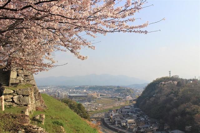 tsuyamajo-sakura047