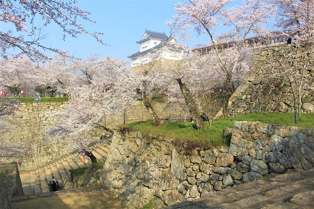 tsuyamajo-sakura040