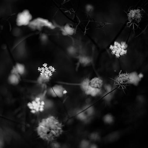d5000 dof middleforksavanna nikon abstract blackwhite blackandwhite blur branches bw depthoffield dreamlike dreamy flowers landscape marshland monochrome natural noahbw prairie square summer wetlands