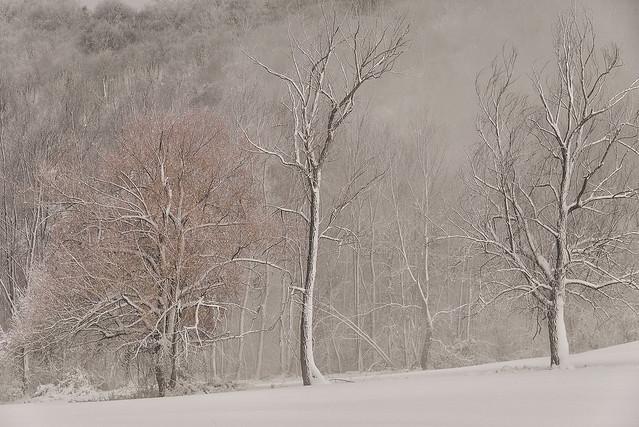 A SPRINKLING of SNOW   (Una spolverata di neve)