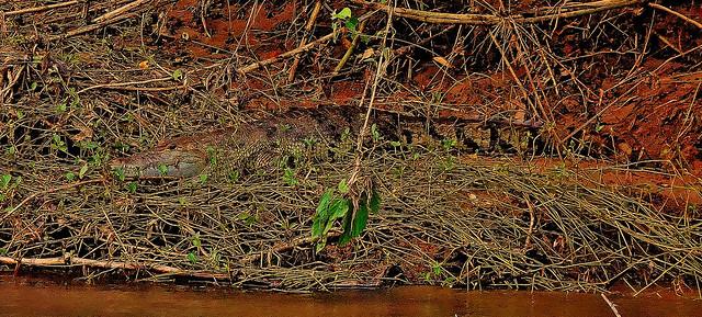 MEXICO, Las Guacamayas, direkt am Rio Lacantún, Flora und Fauna mitten im Dschungel, Krokodile, 19525/12371