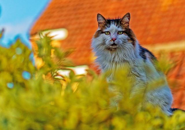 Tilly the 3-legged cat (Olympus OM-D EM1.2 & Leica 42.5mm f1.2 Prime)