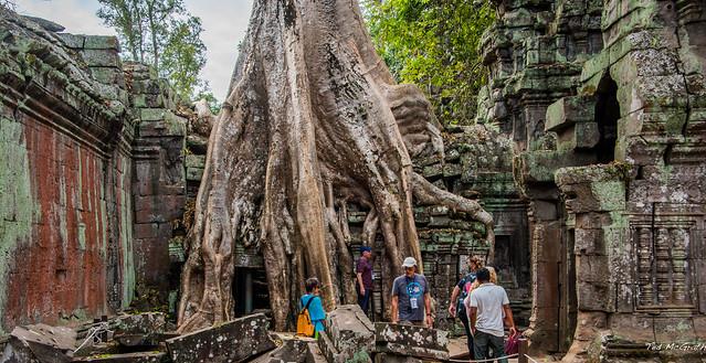 2019 - Cambodia - Siem Reap - Ta Prohm - 16