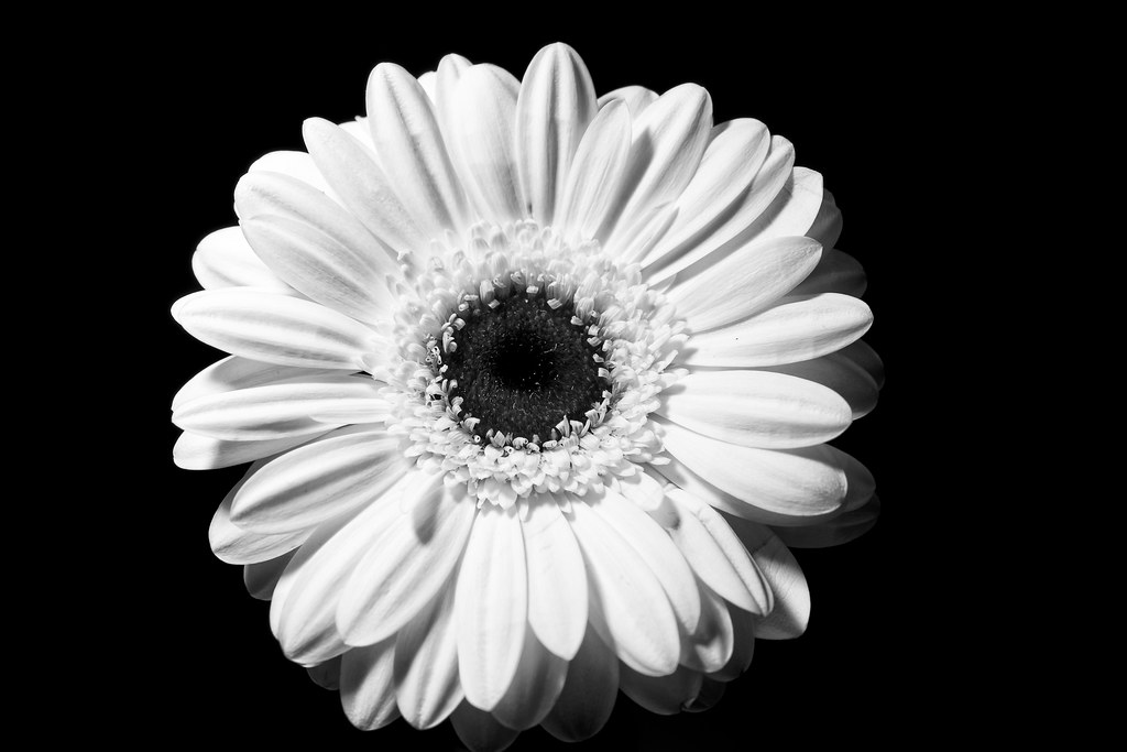 Freitagsblümchen