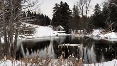 Unfrozen former mill pond, Horning\'s Mills, Dufferin County, Ontario.