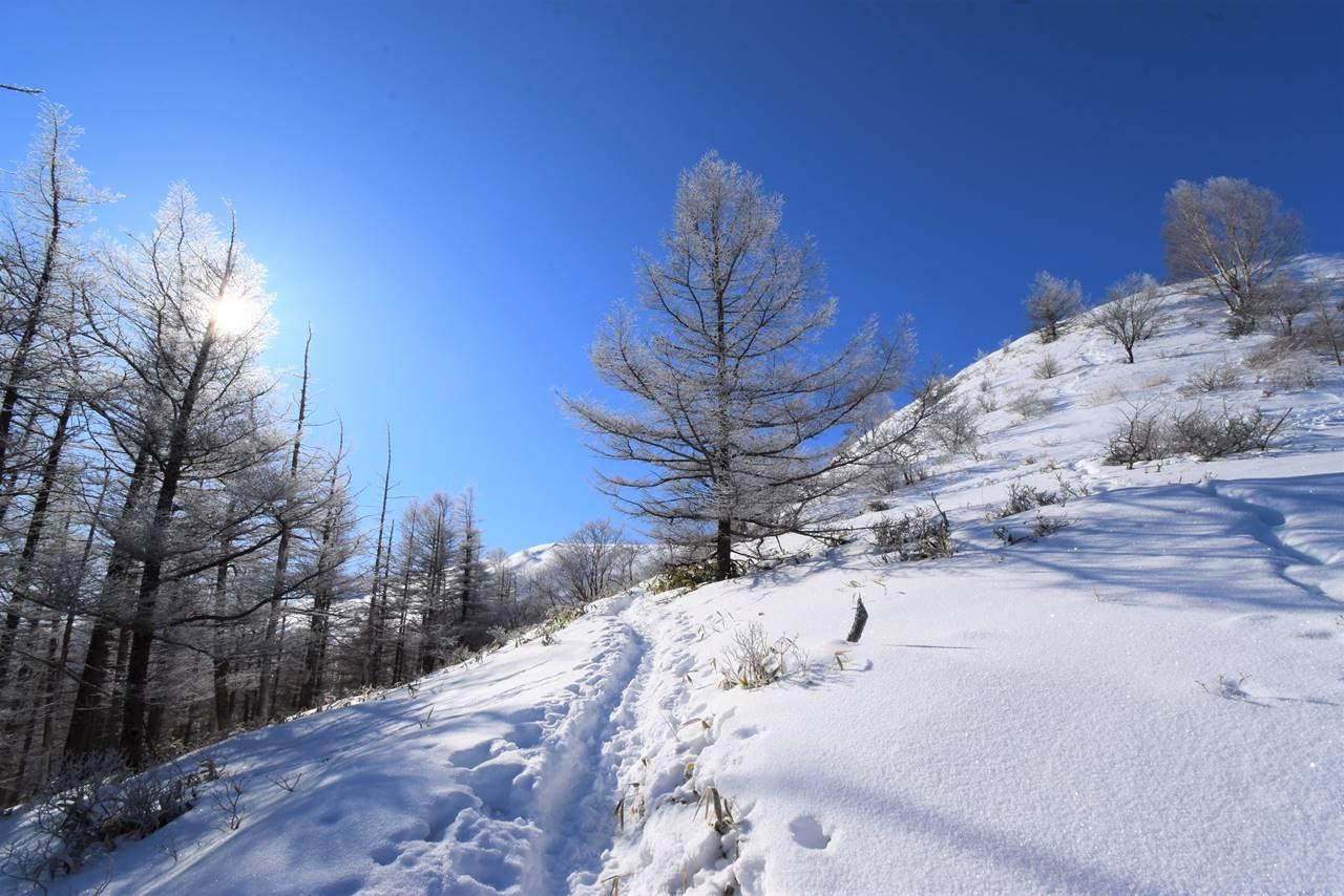 鉢伏山 霧氷と青空