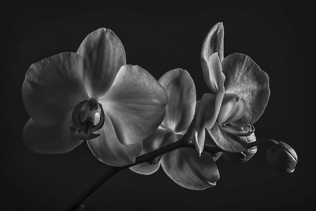 Orchids X 3