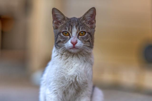 A Friendly Cat