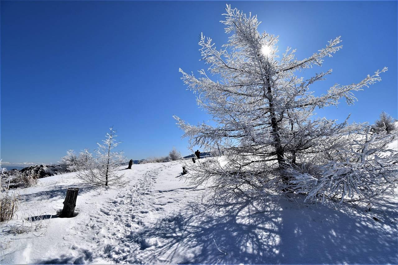 鉢伏山の霧氷
