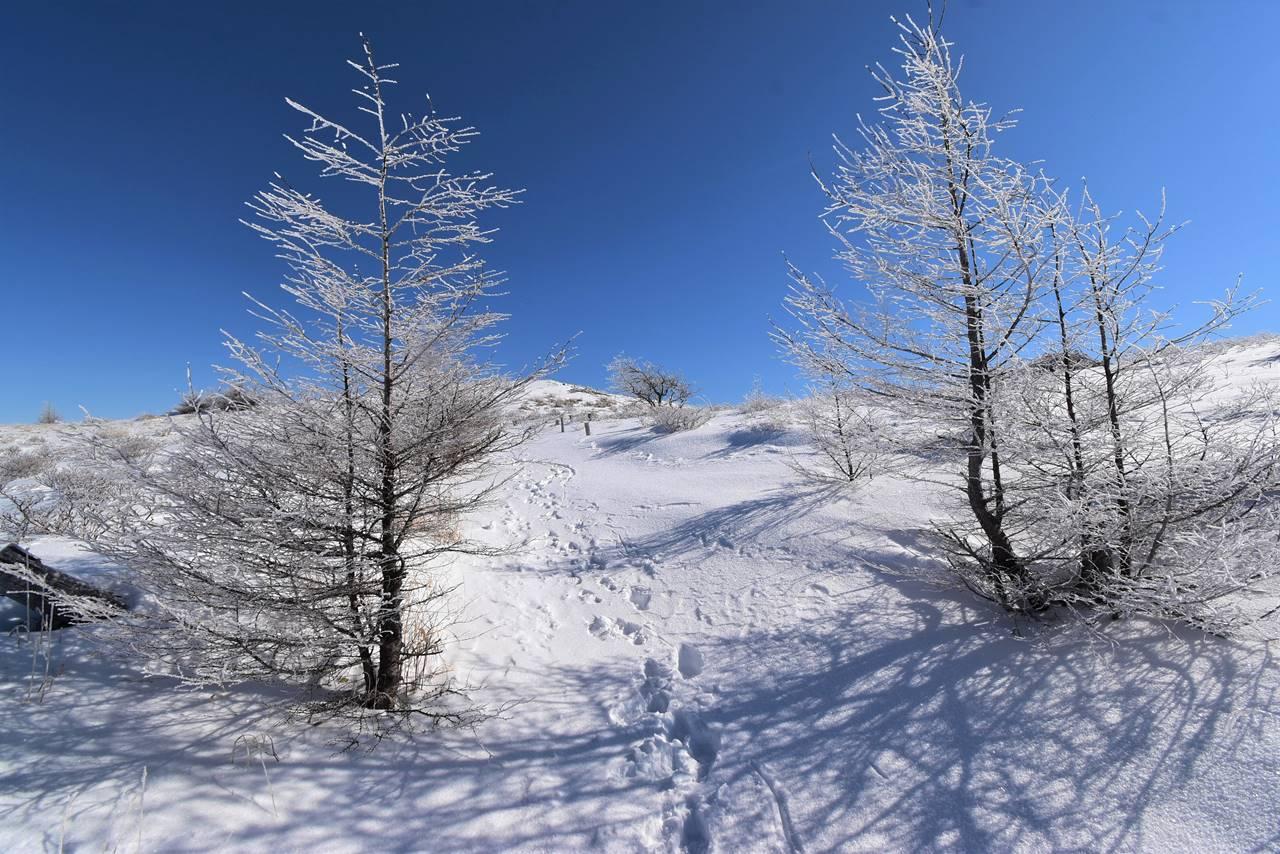 冬の鉢伏山 雪原と霧氷風景
