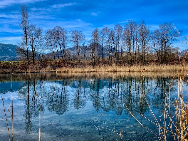 Side-pocket of the river Inn with reflections of trees near Oberaudorf, Bavaria, Germany