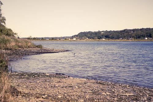 heron beach stones sand atlantic ocean salt landscape coldspringharbor longisland newyork