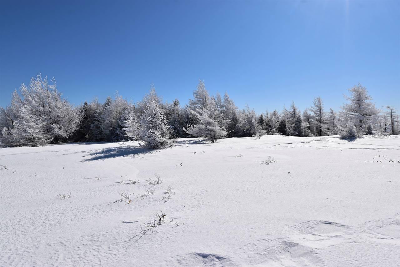 冬の鉢伏山 雪原と霧氷
