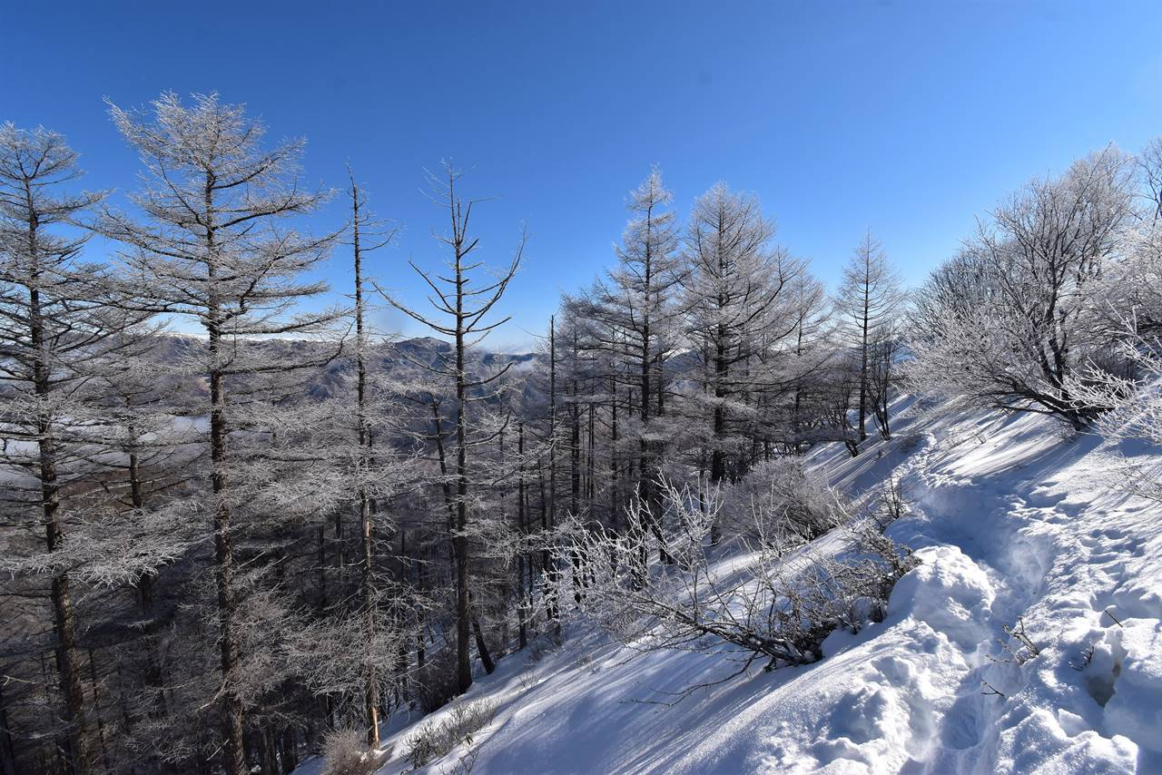 鉢伏山の霧氷風景