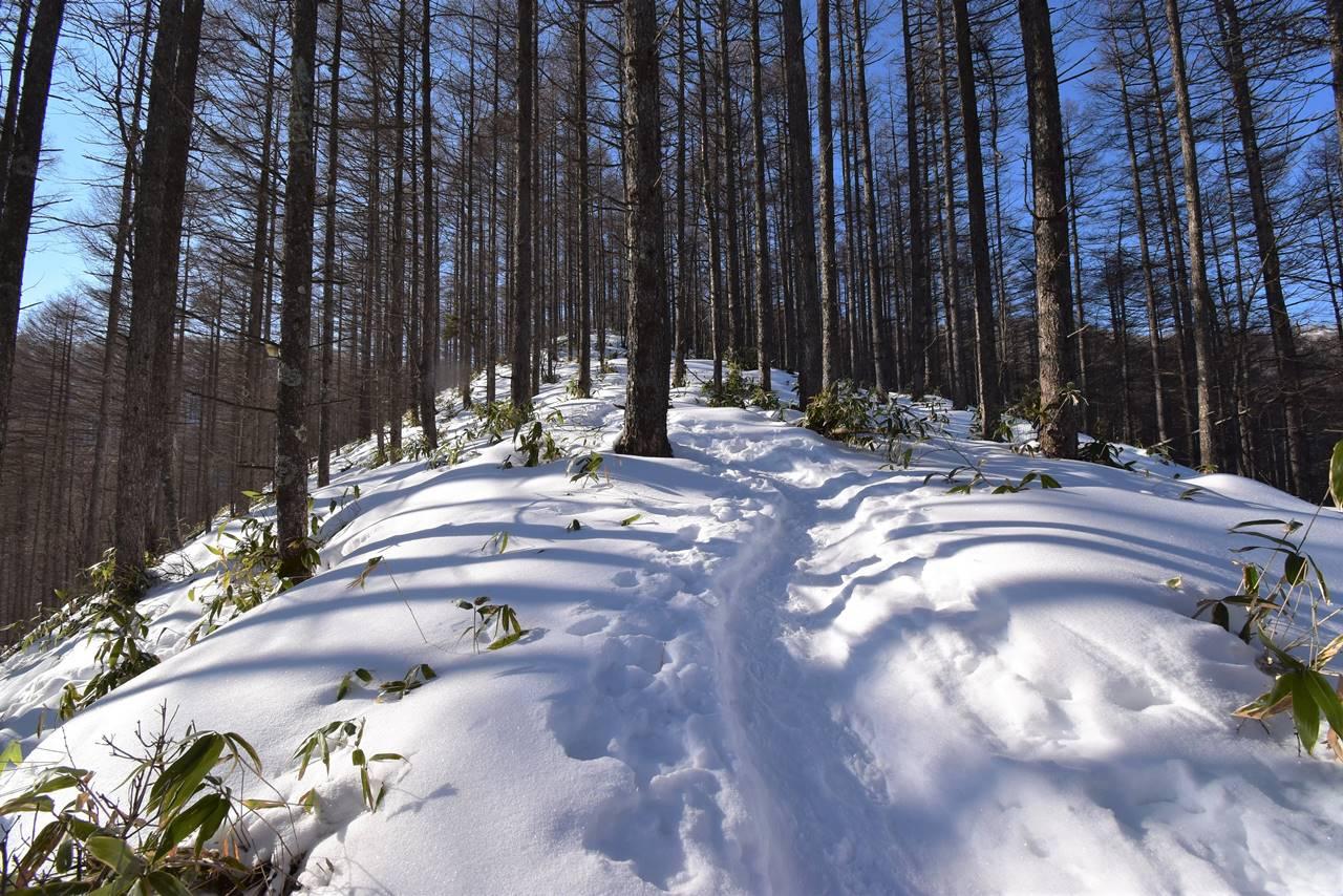 鉢伏山 雪が積もった樹林帯