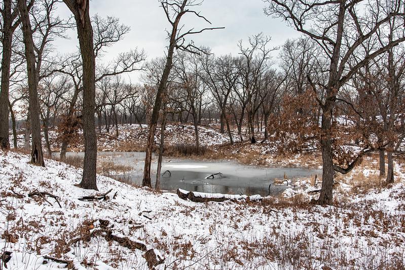 Winter at the Oak Savanna