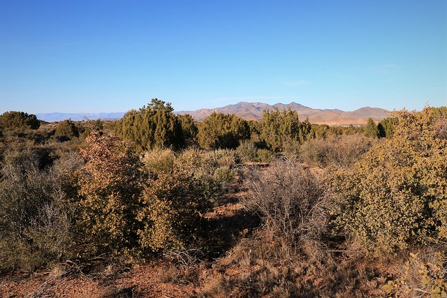 Treed Countryside around Kingman 7D2_5095