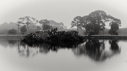 blackandwhitephotography reflections landscapes foggy bw blackandwhite lakes rookery pixel3xl