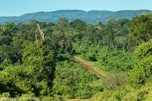 forestswoodsbush landscape centralkenya kenya africa
