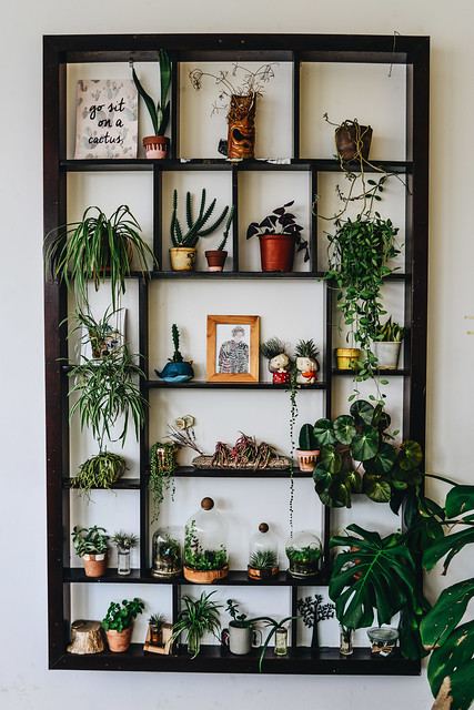Many green plants on wooden shelf