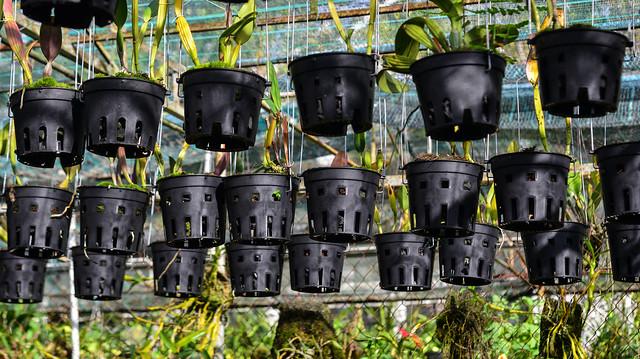Black plastic flower pots hanging at greenhouse