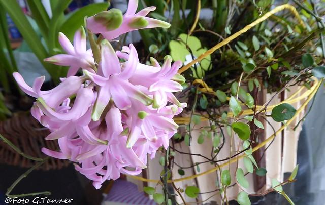 Frühling im Haus