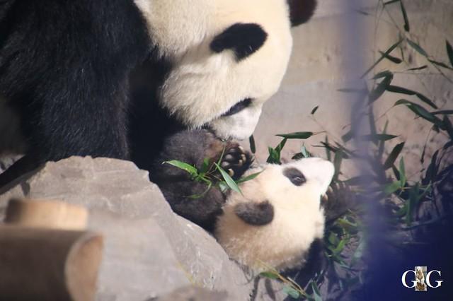 Besuch Zoo Berlin 01.02.202051
