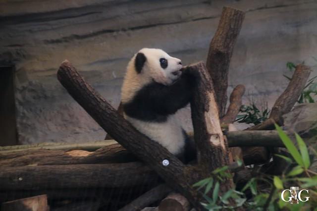 Besuch Zoo Berlin 01.02.202032