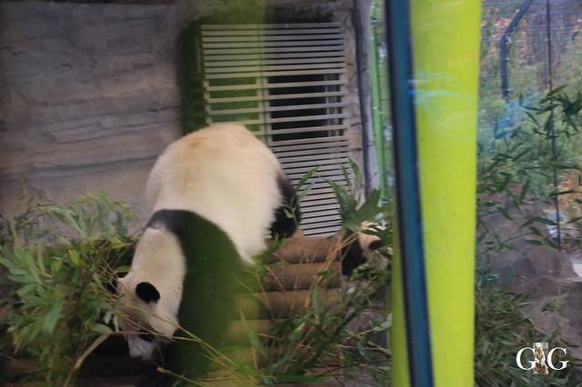 Besuch Zoo Berlin 01.02.202027
