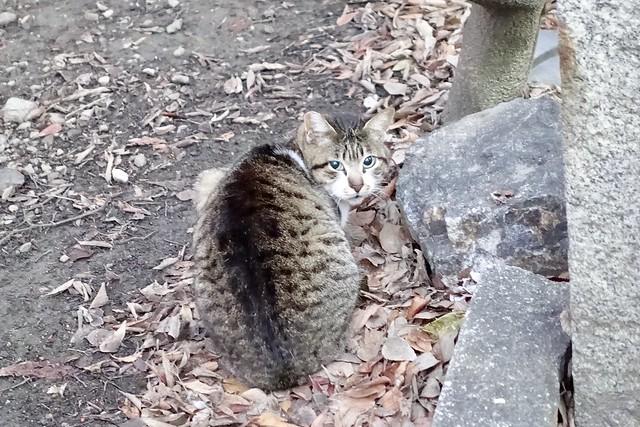 Today's Cat@2020-02-15