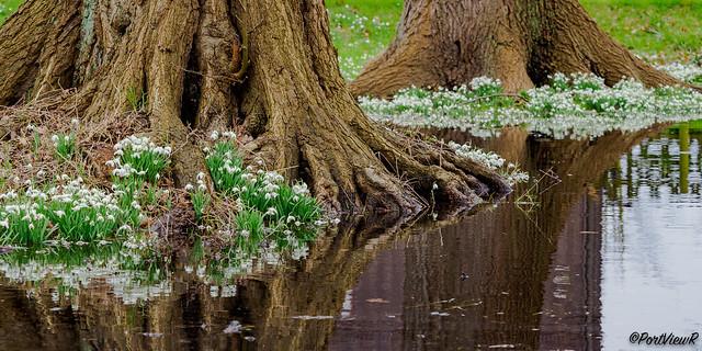 Early spring flowers - Hamburg, Germany